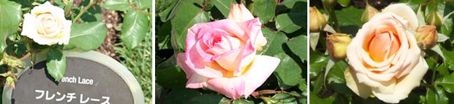 walk_rose2013_05