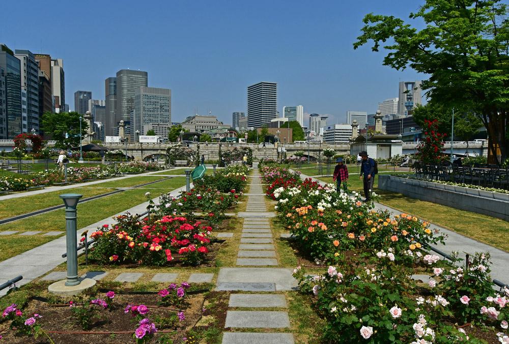 作品名:公園のバラ園 / 撮影場所:中之島公園 / 撮影者:かどきんさん